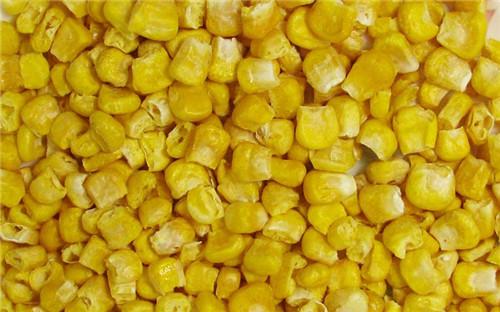 冻干tian玉米
