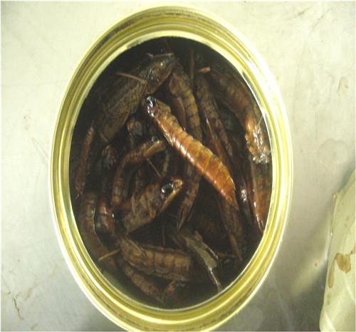 微波干燥水cang蝇